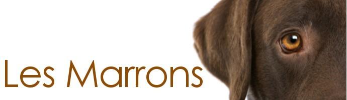 Snoods pour chien marrons