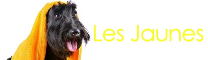 Snoods pour chien jaunes