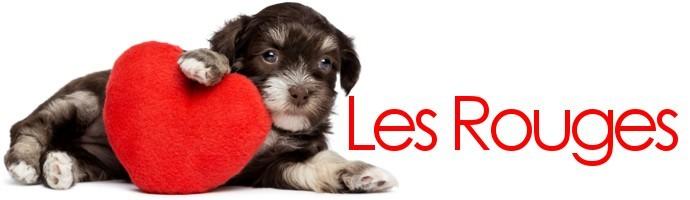 Snoods pour chien rouges